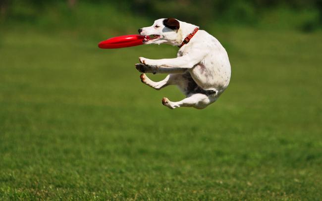 Тренируем собаку с пользой для себя