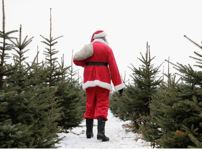 Как выбрать экологичную елку: советы от Гринпис