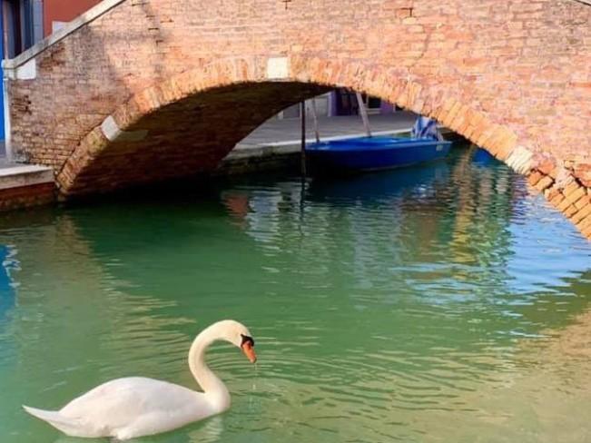 В Венеции вода в каналах очистилась из-за коронавируса