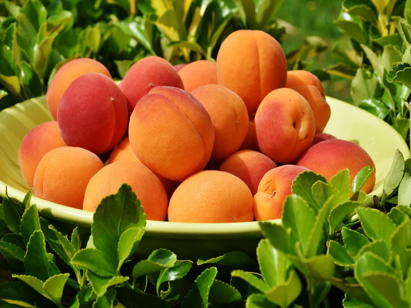 Лучший летний фрукт: все о пользе персиков
