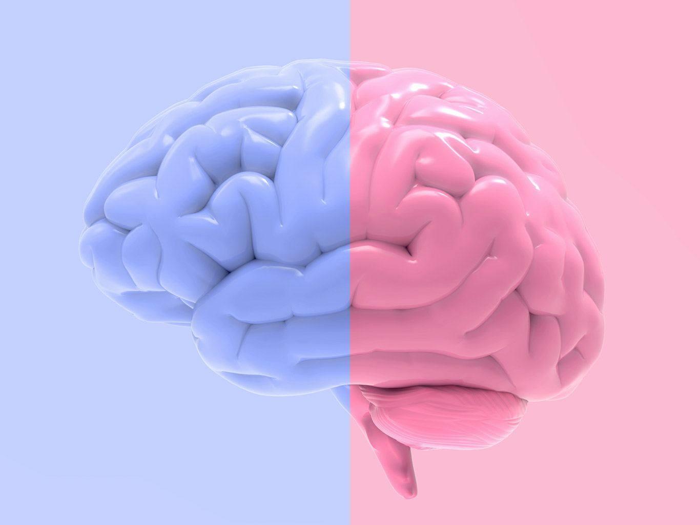 Мужской и женский мозг: в чем отличия?