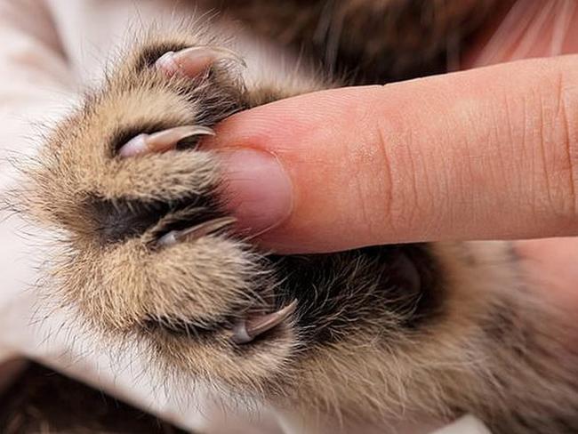 Ученые установили связь между кошачьими царапинами и … шизофренией!