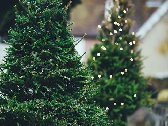 Новогодние елки небезопасны для здоровья человека— Ученые