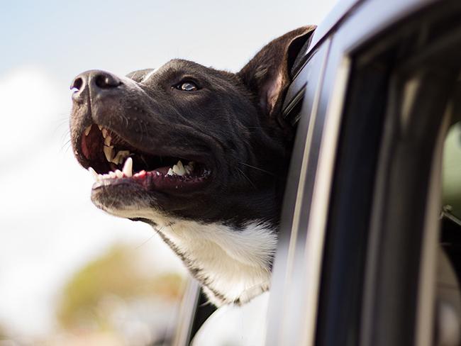 Как защитить домашних любимцев от жары, рассказали ветеринары