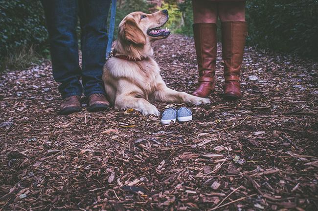5 основных причин завести собаку