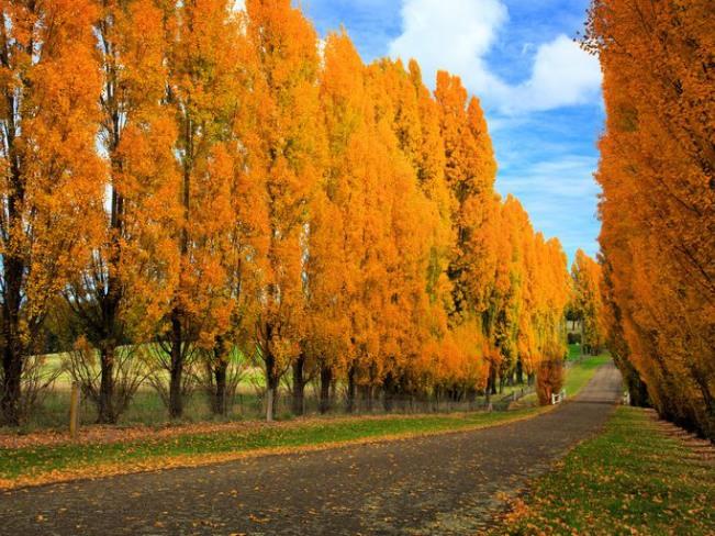Где самая красивая осень на Земле: топ 10 мест