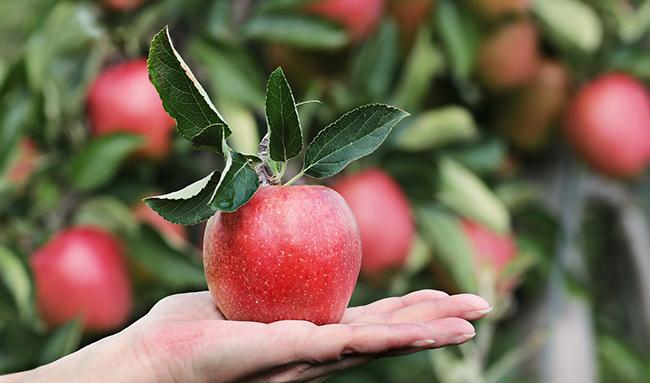 Как защитить организм от токсинов: 10 необходимых продуктов