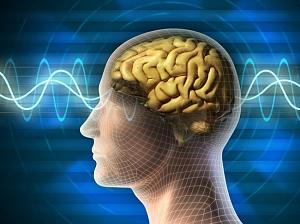 Ученые назвали основную причину старения мозга