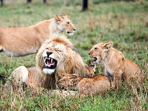топ-8 самых заботливых отцов мире животных