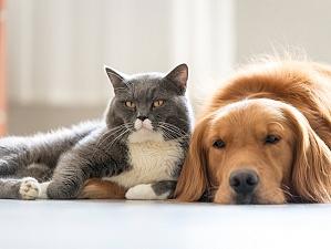 Эксперты узнали, кто сообразительней – кошки или собаки