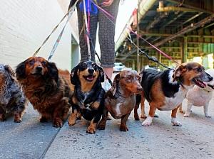 Прогулки с собакой продлевают человеческую жизнь