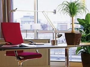 Топ-7 комнатных растений, которые очищают воздух