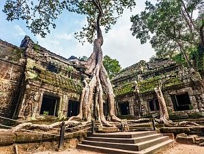 Топ-10 самых странных и удивительных деревьев на планете