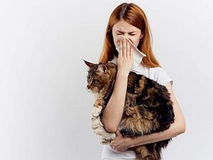 Найдено средство, спасающее от аллергии на кошек