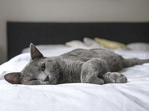 Стало известно, как кошки воздействуют на сексуальные пристрастия своих хозяев