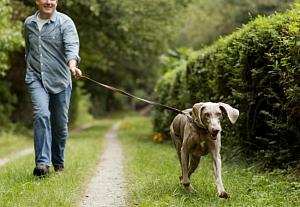 Скорость ходьбы человека определяет продолжительность его жизни
