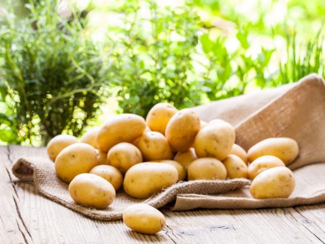 Картофель может заменить спортивное питание