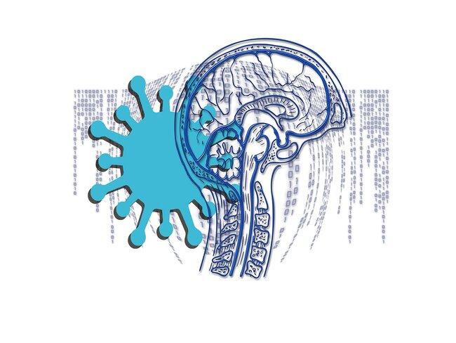 Обнаружено новое свойство коронавируса: он может повреждать мозг