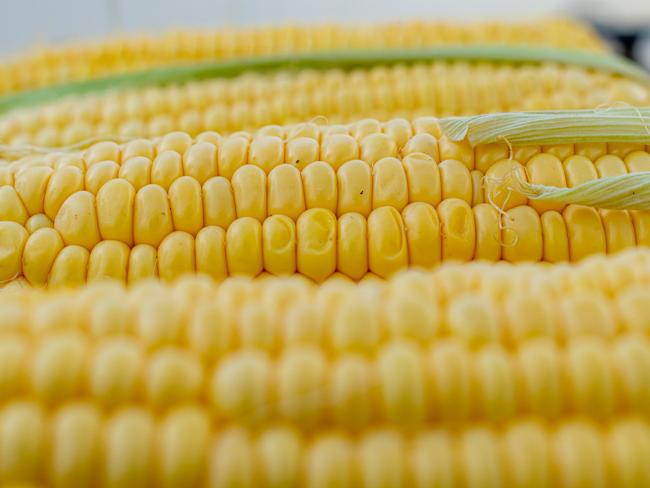 Эксперты рассказали о новых свойствах кукурузы