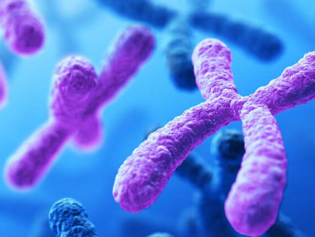 Биологам удалось расшифровать Х-хромосому человека